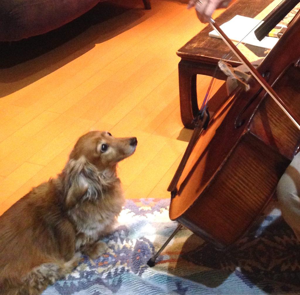 犬と音楽・チェロ